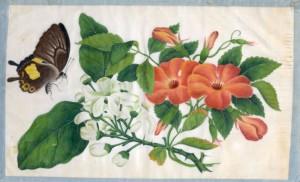 Fabrication papier de riz chine 19ème peintures papillons